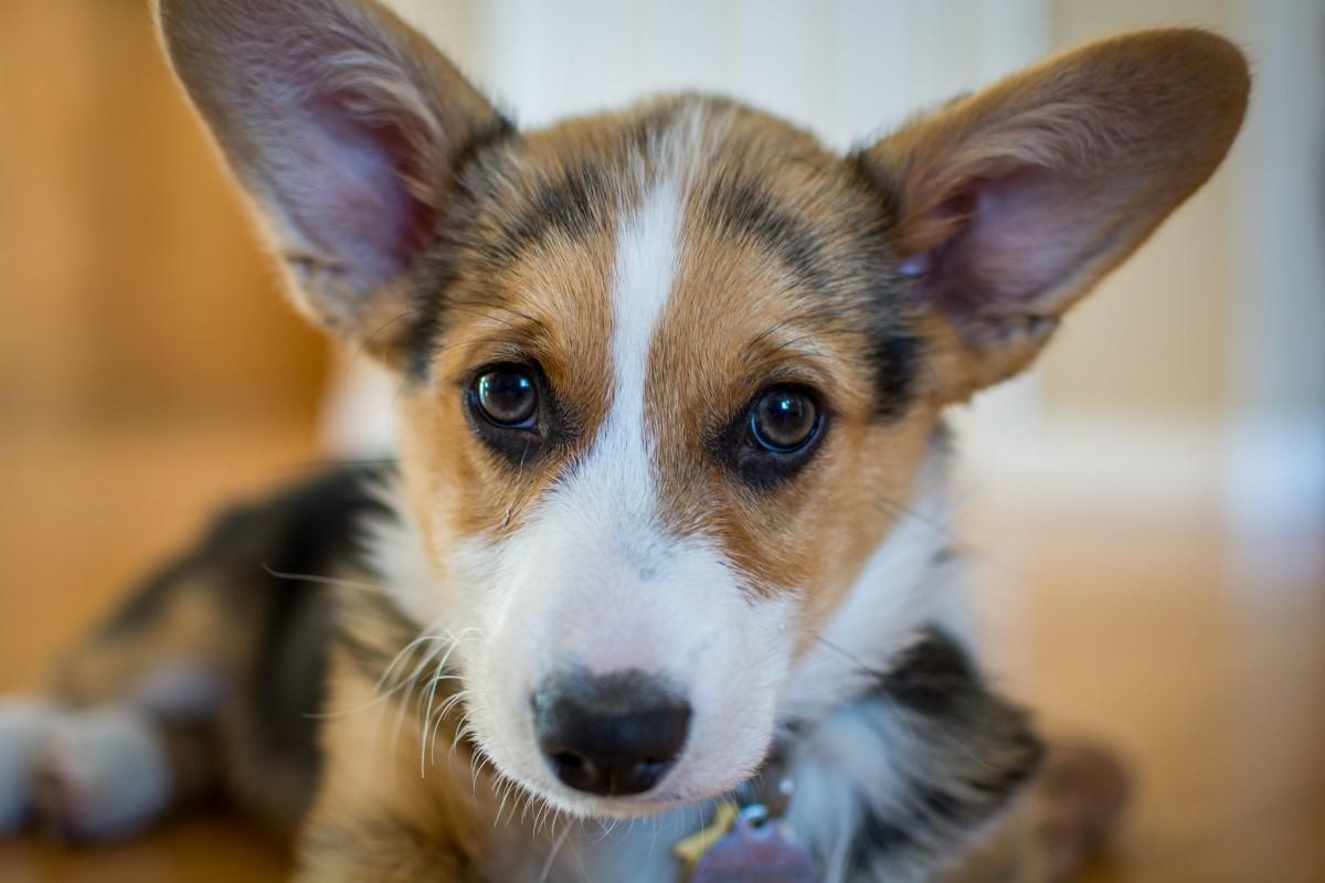 smart-security-cuidado-mascotas