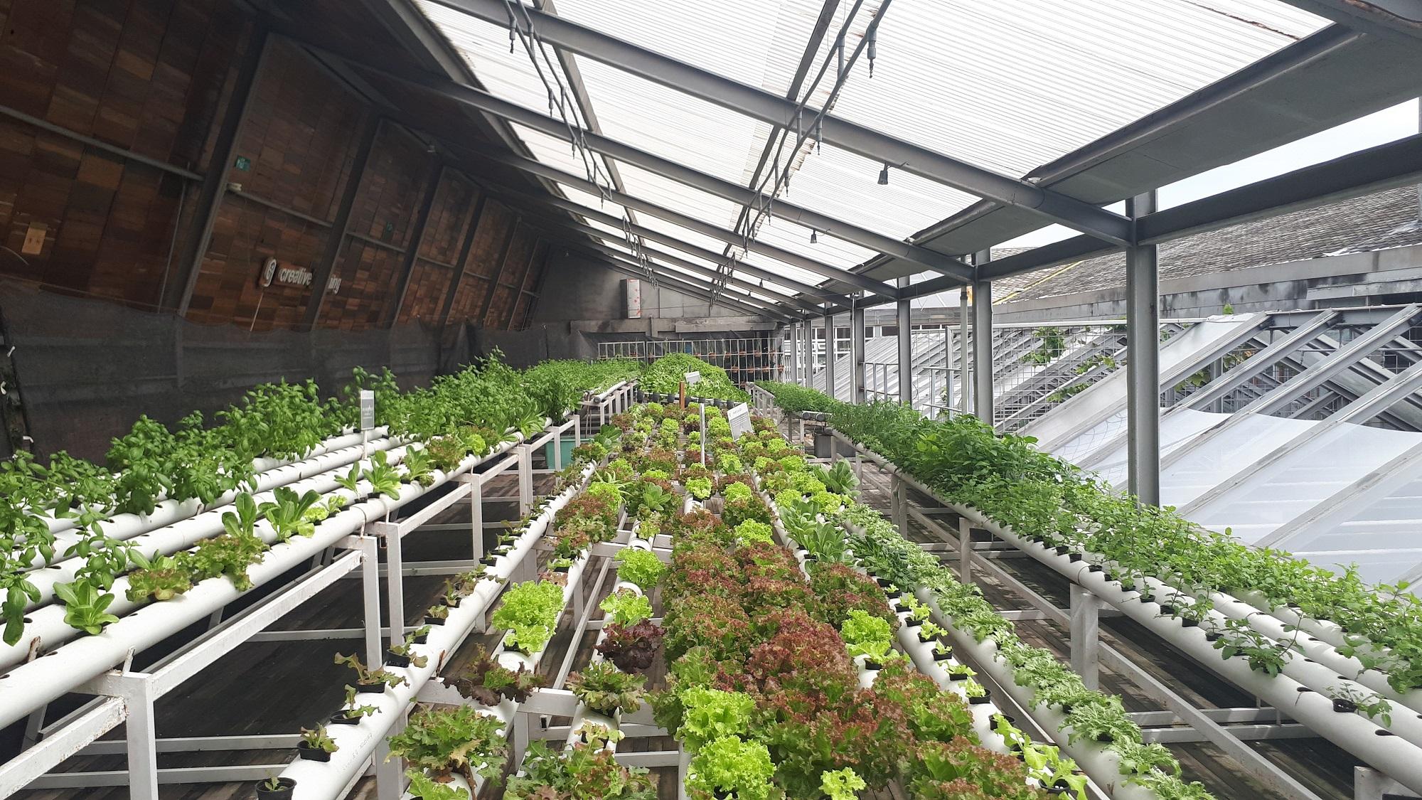Invernaderos conectados para una agricultura más eficiente