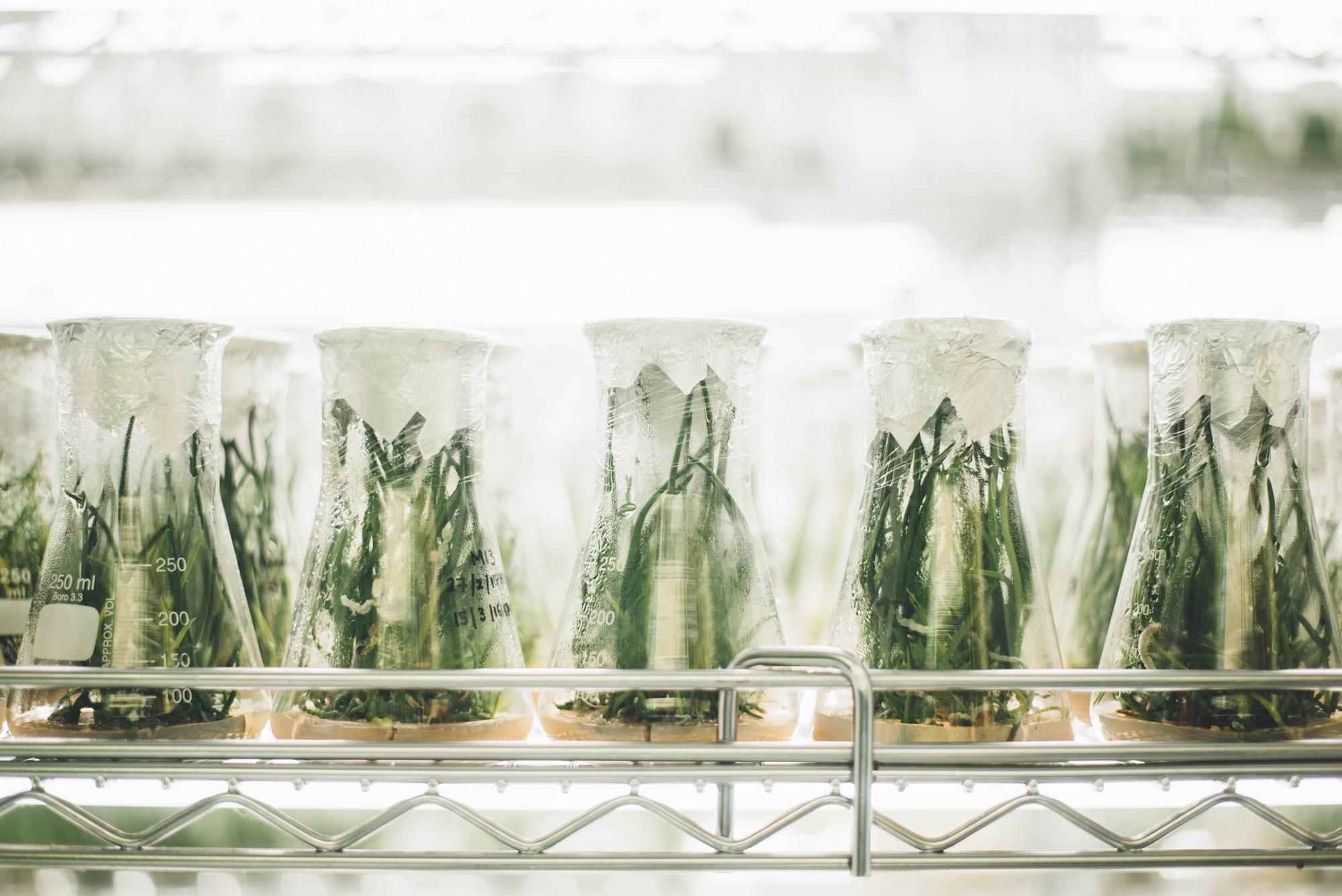 Biotecnología aplicada a las plantas