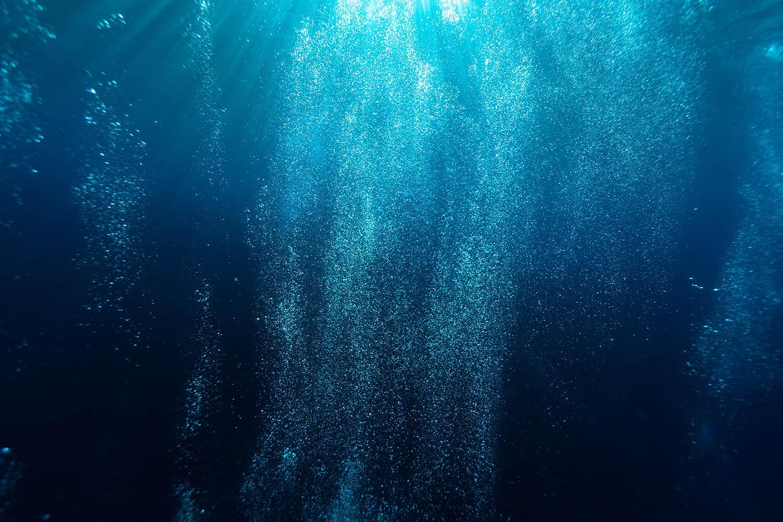 el plancton como bioindicador de la salud de los océanos