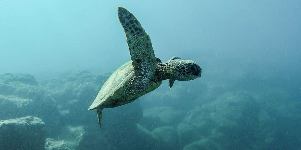 tecnología para los océanos