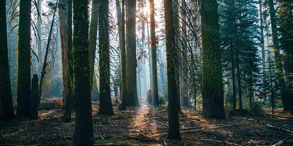 tecnología para reforestar