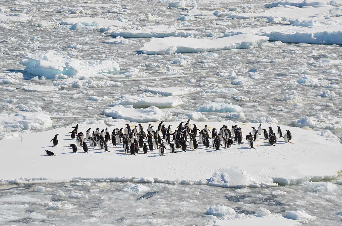 nuevas colonias de pingüinos